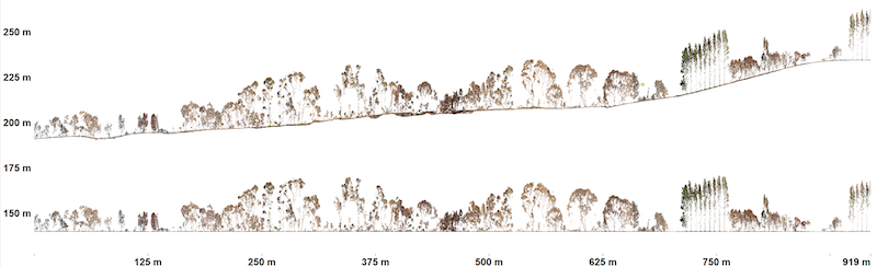 The image below shows a three-metre-wide vertical cross-section along the yellow line. Trees are displayed above the elevation profile (top graph) and as height above ground (bottom graph). The resolution of the pointcloud is so good that one can easily recognise even partly burnt trees.